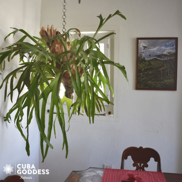 Cuba Goddess Retreats